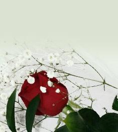 banner-flor-para-el-recuerdo